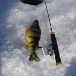 Brandon Jigged up a Fat Yellow Perch