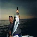 New York City Bluefish