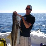 Florida Gulf Cobia Came Up For Brandon