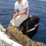Florida Goliath Grouper Finds Brandon Fishing a Gulfcoast Wreck