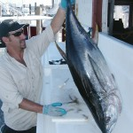 Montauk Bluefin Tuna and Jimmy Ready to Fillet