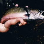 Pretty Nissequogue Brooktrout