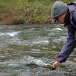 Pulaski Salmon Freedom