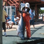 Montauk Bluefin Tuna, Showing-off, Again!