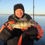 Winter Perch in Sweden