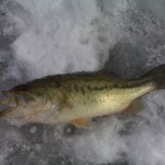 2010 Largemouth Bass
