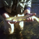 Beaverkill River Brown on a #24 Fly