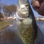 Indiana Crappie on a November Day