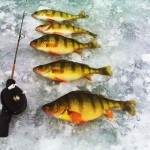 Westchester Ice Fishing for Yellow Perch
