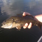 Kensico Smallmouth Freedom