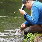 Nissequogue Catch and Release Trout