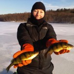 Muscoot Reservoir Yellow Perch