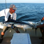 White Marlin Offshore New York